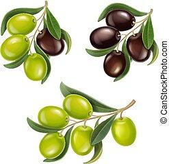 azeitonas, ramos, set., realístico, azeitona verde, pretas
