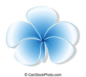 azul, fresco, flor, five-petal