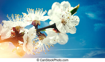 azul, primavera, fundos, contra, damasco, floral, flores, skie