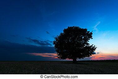 azul, só, céu, árvore, contra, pôr do sol