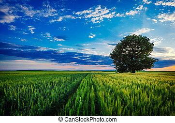 azul, só, céu, árvore, contra, sunset.