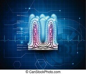 azul, tecnologia, intestinal, fundo, villi