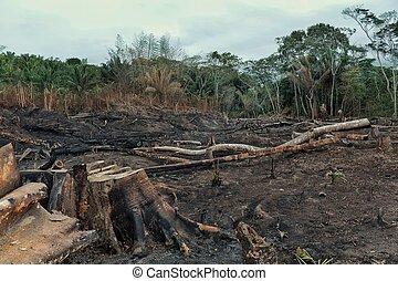 baixo, queimado, campos, acto derrubar árvores, extensivo, deforestation, resultado, floresta tropical
