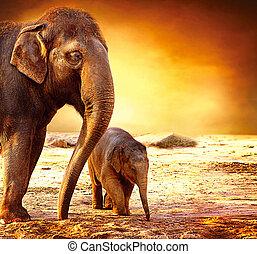 bebê, mãe, ao ar livre, elefante
