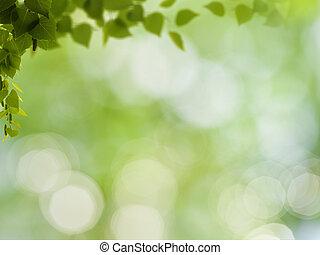 beleza natural, abstratos, fundos, bokeh, foliage, vidoeiro
