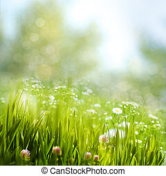 beleza natural, primavera, fundos, flores, foliage, margarida