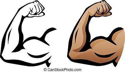 bicep, muscular, flexionar, braço