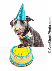 bolo sujo, aniversário, comer, cão
