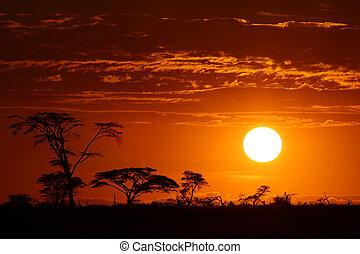 bonito, áfrica, pôr do sol, safari