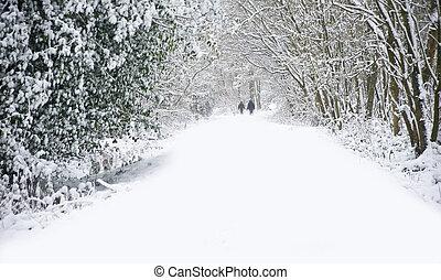 bonito, andar, inverno, família, neve, profundo, cena, virgem, floresta, passagem, caminho, cachorros