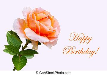 bonito, close-up, flor, rosa, cartão aniversário, feliz