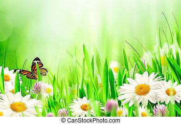 bonito, flores mola, chamomile, fundos