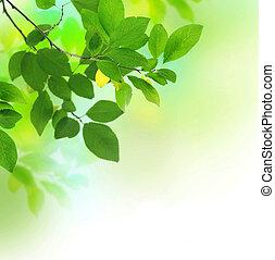 bonito, fresco, folhas, verde