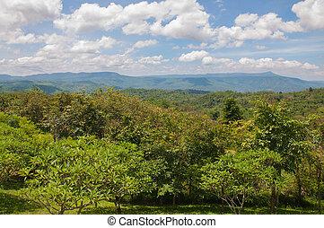 bonito, montanha, paisagem verde, árvores