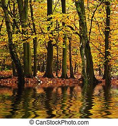 bonito, outono, estação, outono, refletido, n, cores água, floresta, vibrante, paisagem