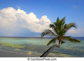 bonito, praia, coqueiros
