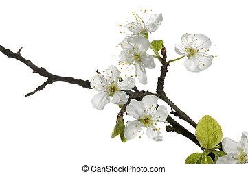 bonito, primavera, flor