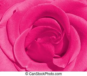 bonito, rosa