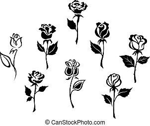 bonito, rosas, jogo