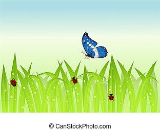 borboleta, capim