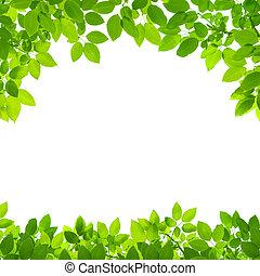 borda, folhas, verde branco, fundo