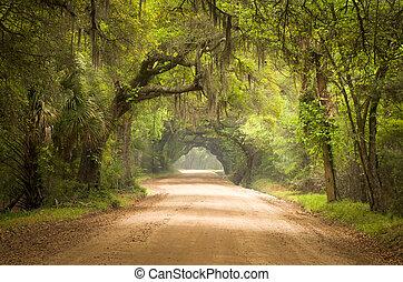 botânica, musgo, sujeira, ilha, carvalho, estrada, árvores, baía, plantação, viver, profundo, edisto, espanhol, sc, charleston, sul, floresta