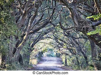 botânica, musgo, sujeira, túnel, ilha, espanhol, carvalho, árvores, baía, plantação, pântano, edisto, spooky, sc, estrada