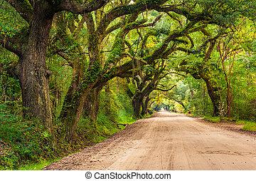 botânica, sujeira, carvalho, árvores, baía, plantação, edisto, ao longo, estrada
