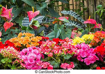 botanica, jardim inverno