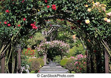 botanica, rosa, jardim, jardins