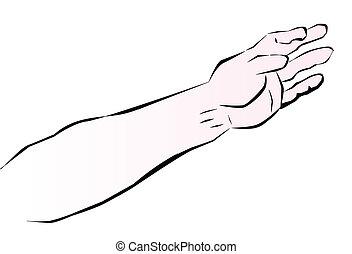 braço, human
