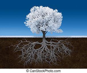 branca, árvore