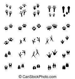 branca, animal, mamíferos, silhuetas, fundo, pegadas, pássaros, isolado, -, jogo