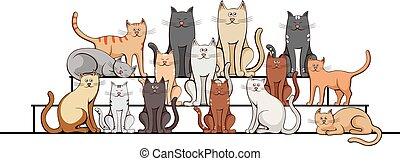 branca, gatos, grupo, passos, experiência.