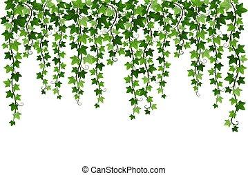 branca, penduradas, rastejar, borda, planta, botânico, element., experiência., creeper, verde, desenho, isolado, escalando, ilustração, hedera, hera, videira, vetorial