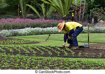 brisbane, botanica, cidade, jardins