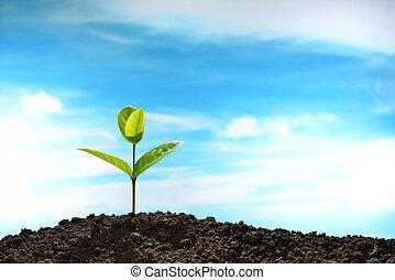 broto, céu, experiência verde, solo, crescendo, saída