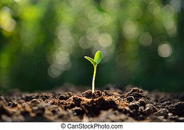 broto, solo, manhã, luz verde, crescendo, saída