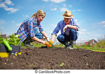 brotos, seedling