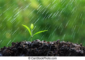 brotos, verde, chuva