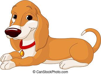 cão, cute, mentindo