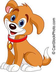 cão, cute