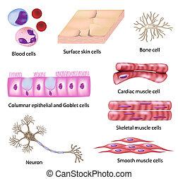 célula, human, cobrança