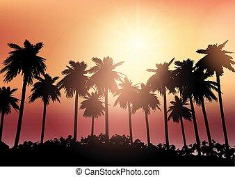 céu, árvore, contra, silhuetas, palma, pôr do sol