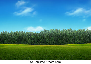 céu azul, jovem, paisagem, floresta verde