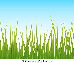 céu azul, seamless, capim, experiência verde