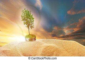 céu, dentro, árvore, lâmpada, areia, verde, pôr do sol, cinza