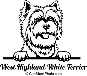cabeça, isolado, terrier, peeking, altiplano, oeste, cão, -, branca