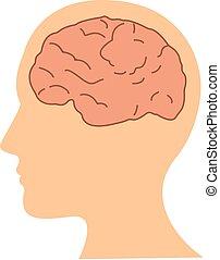 cabeça lisa, ilustração, cérebro, vetorial, desenho, human, ícone