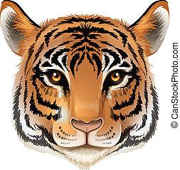 cabeça tigre